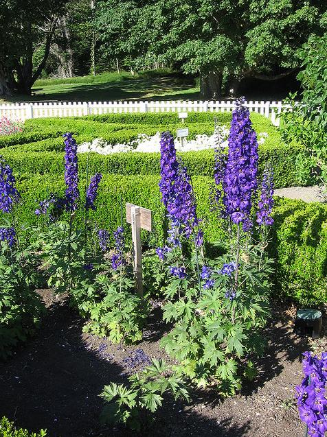 Flowers in the Formal gardens, British Camp San Juan Island