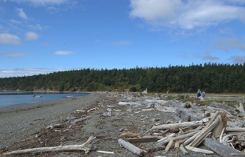 Driftwood on Lopez Island