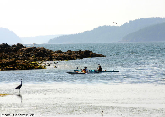 Sea kayakers observe a blue heron on an Orcas Island Sea kayaking tour.