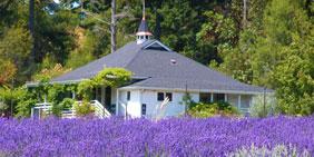Pelindaba Lavender Farm on San Juan Island