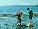 Clam dig the Spencer Spit